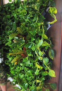 Green Walls @ Cabinet de Avocatura Green Walls, Herbs, Cabinet, Clothes Stand, Closet, Herb, Cupboard, Spice