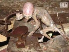 FBI CONTROLE CIA: Veja as estranhas fotos de alienígenas encotradas na Deep Web
