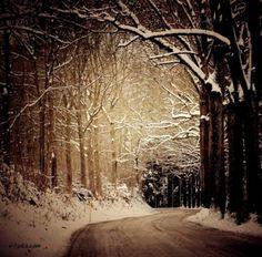 winter000567v-i-pics