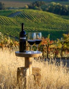 St. Supery Winery, Napa Valley