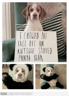 Shaming pets has gone a new level - Click image to find more animals Pinterest pins