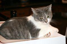 My cat Lola. Debra, Lima, New York. 9/22/12.