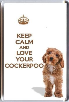 A fridge magnet with a picture of a Cockerpoo puppy dog with the words KEEP CALM AND LOVE YOUR COCKERPOO -£2.95 - Definitely a quirky Christmas gift for mother whenever she what's to shout at Alfie! @Stacey Craven