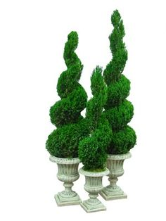 Artificial Christmas Trees, Artificial Flowers, Artificial Plants - Preserved Spiral Topiary