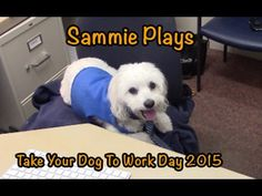 Take Your Dog To Work Day 2015