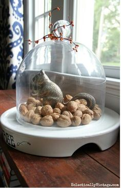 Squirrel and his nuts under a cloche