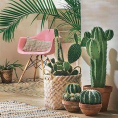 Massive houseplants and tall cactus seem good. A cactus may also be set in a flower pot, where it's rendered […] Decoration Cactus, Decoration Plante, Cactus E Suculentas, Cactus Planta, Indoor Cactus, Indoor Plants, Plantas Indoor, Interior Plants, Interior Design
