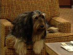 6.  Pin your favorite celebrity dog:  Buck Bundy from Married with Children