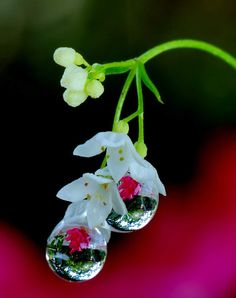 Water droplets with flowers Image Zen, Image Nature, Dew Drops, Rain Drops, Amazing Photography, Nature Photography, Drip Drop, Fotografia Macro, Water Art
