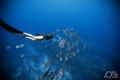 Freediving - Photo taken on one breath by Eusebio Saenz de Santamaria. #freediving #underwater #1ocean1breath #ocean #oneoceanonebreath