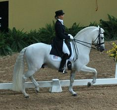 Andalusian horse - Wikipedia, the free encyclopedia