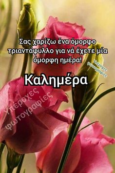 Greek Quotes, Good Morning, Irene, Beautiful, Decor, Greece, Buen Dia, Decoration, Bonjour