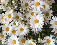 Umut Işığı: Hoş Sürpriz #blog #blogger #blogyazılarım #UmutIşığı #HoşSürpriz #SibelBaba #SibelOnayBaba