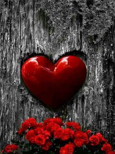 Advance Happy Valentine's day S. Love Heart Images, Heart Pictures, I Love Heart, Happy Heart, Heart In Nature, Heart Art, Heart Wallpaper, Love Wallpaper, Love Symbols