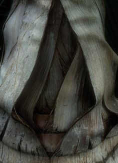 """Saatchi Online Artist: Cynthia Dickinson; Color, 2010, Photography """"Palm Tree """""""