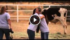 http://www.guardalo.org/4-vitelli-liberati-corrono-per-la-prima-12439/1666842422/