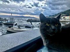 #blackcat #streuner #kroatien #meer Shots, Animals, Animaux, Animal, Animales, Animais