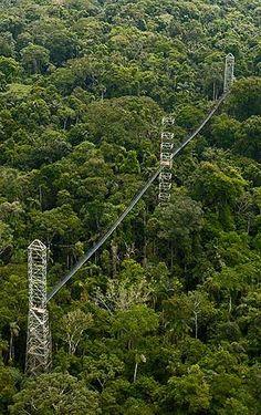 Canopy walk over the Amazon - Peru
