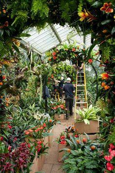 Kew Gardens - Tropical Extravaganza - until 4 March Kew Gardens, Botanical Gardens, Outdoor Gardens, Modern Gardens, Small Gardens, Greenhouse Plans, Greenhouse Gardening, Greenhouse Wedding, Cheap Greenhouse