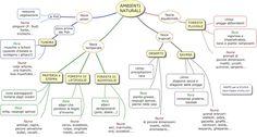 AMBIENTI+NATURALI.mappe-scuola.com.jpg (1600×856)