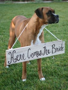 Rustic Chic Weddings Old Barn Wood Hand Painted Here Comes The Bride Sign For Dog Pet Photo Prop