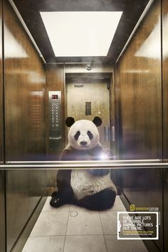National Geographic Ads Feature Animals Taking Selfies Of Themselves - DesignTAXI.com Panda Selfie!