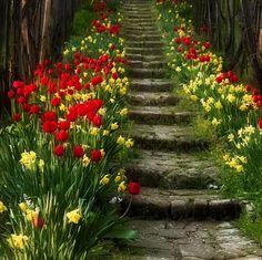 garden - gardening - garden steps - flowers - tulips - garden design and architecture Garden Steps, Garden Paths, Stairway To Heaven, Spring Blossom, My Secret Garden, Parcs, Dream Garden, Daffodils, Tulips Garden