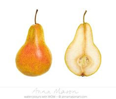"Dissected Pear © 2006 ~ annamasonart.com ~ 41 x 31cm (16"" x 12"") #AnnaMasonNewSite"
