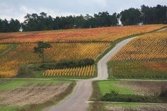 Couleurs automnales - Photographies Patrick Jassiones Vineyard, Champagne, Country Roads, Outdoor, Photographs, Landscapes, Colors, Outdoors, Vine Yard