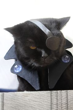nudityandnerdery:    migraine-sky:    my cat cosplays Nick Fury      Aw, adorable Nick Furry.