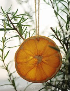 Dried orange slices - use as ornaments, on wreaths, in potpourri bags with cinnamon sticks and cloves. Noel Christmas, 12 Days Of Christmas, Diy Christmas Ornaments, Little Christmas, Winter Christmas, Christmas Decorations, Xmas, Orange Ornaments, Rosemary Christmas Tree