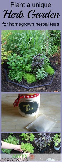 Grow a unique herb garden for homegrown herbal teas using this cool up-cycyling idea.