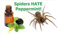 I had nooo idea and nobody ever told this...definitely gonna try it, I was bitten by a brown recluse last year!