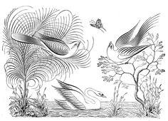 Antique Clip Art – Pen Flourished Swan, Birds, Tree