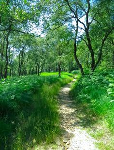 Trail in the woods (Brackvenn, Belgium) by Biker and Hiker