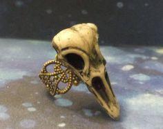 Cuervo de taxidermia de aves anillo de por Dulcecalaveritas en Etsy
