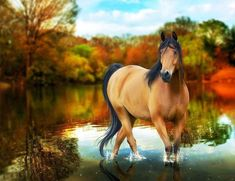 Red Horse Wallpaper Widescreen Hd Free Download