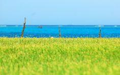 [You should be here] Ly Son island, Vietnam  #ysbh #youshouldbehere #lyson #island #landscape #sightseeing #beach #beauty #scenery #vietnam #destination #excursion #travel #igtravel #igphoto #instatravel #travelgram