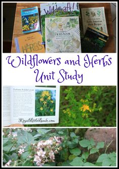 We've been fascinated with wildflowers and herbs lately.