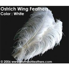 """Ostrich Wing Bl. White +25"""""""