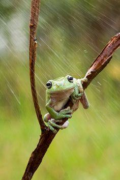 Shower by Dede Tbs