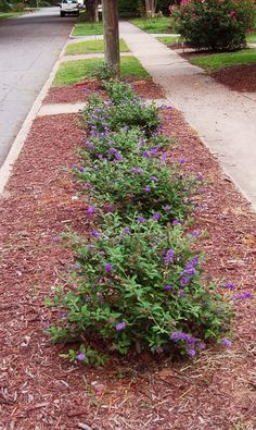 Deer resistant plants (zone We will do this for our home, using black mulch and the plants will be Silverado sages with rosemary, bullrock and some boulders we picked up in the hill country texas. Sidewalk Landscaping, Front House Landscaping, Backyard Landscaping, Backyard Designs, Landscaping Ideas, Garden Yard Ideas, Lawn And Garden, Rain Garden, Garden Beds