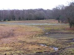 Waterlogged forest clearing, Lords Oak