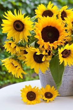 How to Plant Potted Flowers Outdoors in the Soil : Garden Space – Top Soop Sunflower Garden, Sunflower Bouquets, Sunflower Art, Growing Sunflowers, Sunflowers And Daisies, Yellow Flowers, Happy Flowers, Beautiful Flowers, Sunflower Photography
