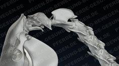 OAA - Die obere Halswirbelsäule des Pferde Skeletts - Okziput, Atlas, Axis  http://shop.pferde-gesund-bewegen.de/produkt/pferdeanatomie-teil-1-das-skelett-des-pferdes-onlinekurs-preview-version/