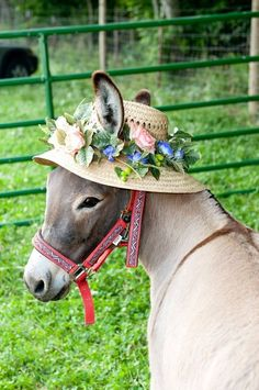 Cute little burro Farm Animals, Animals And Pets, Funny Animals, Cute Animals, Cute Donkey, Mini Donkey, Donkey Donkey, Beautiful Horses, Animals Beautiful