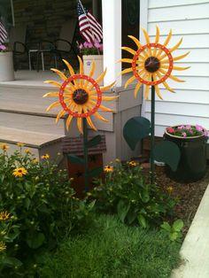 Sunflowers on a rotary hoe
