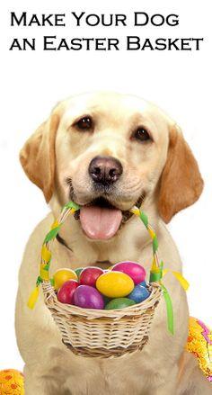 dog, easter basket