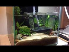 2. Making a Nano Red Cherry Shrimp Planted Aquarium - YouTube