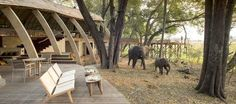 Enjoy Luxury African Safari Lodges in the Okavango Delta, a game reserve in Botswana - home to the world's best wildlife safaris and safari vacations Okavango Delta, Wildlife Safari, Game Reserve, Outdoor Furniture Sets, Outdoor Decor, African Safari, Lodges, Vacation, World